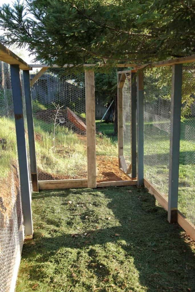 DIY Chicken Coop roaming area for chickens