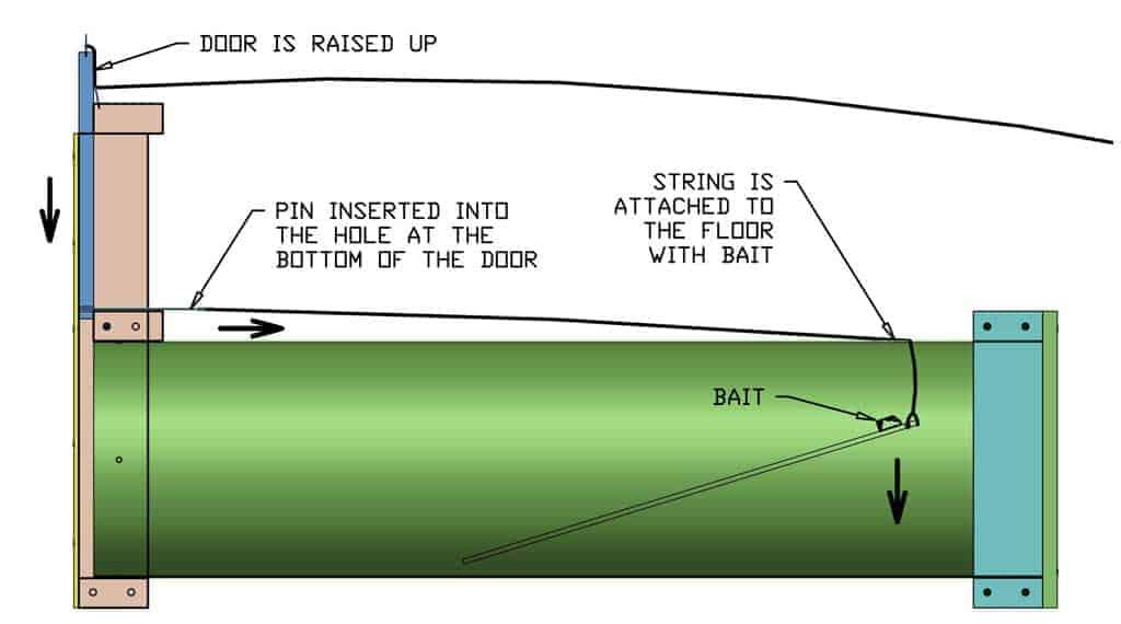 diagram of the DIY skunk trap