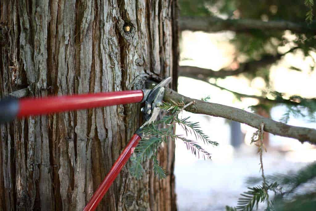 cutting tress branches