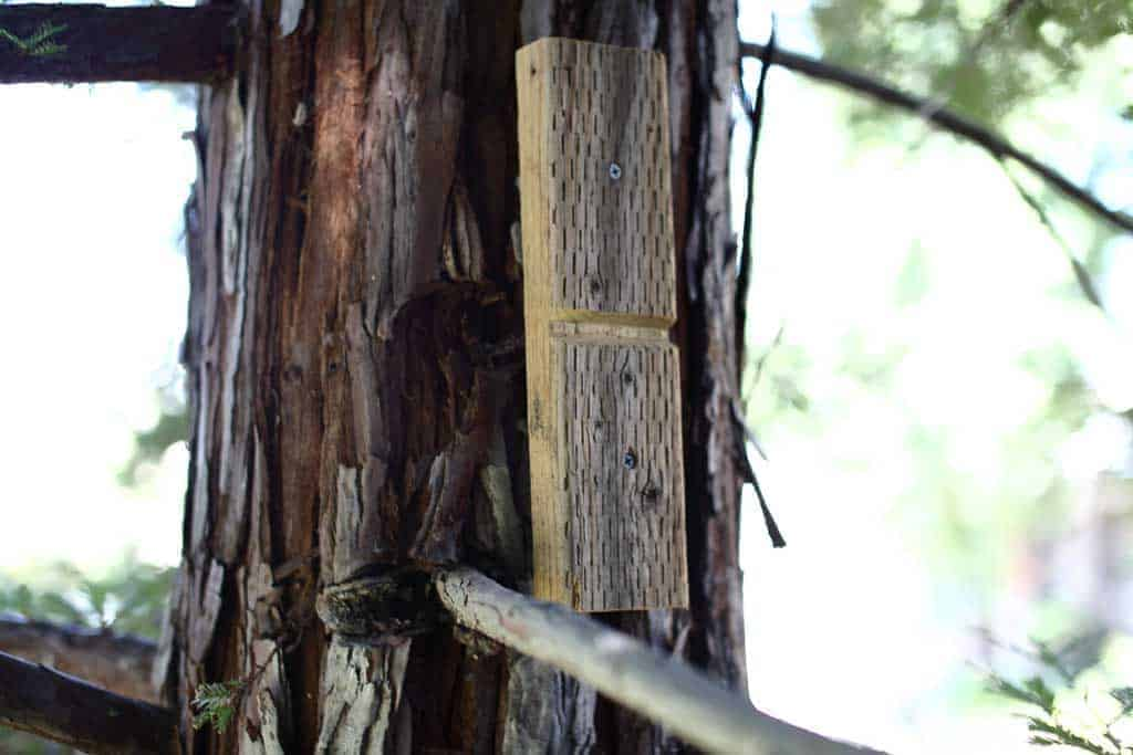 attaching tree protection blocks for diy zip line