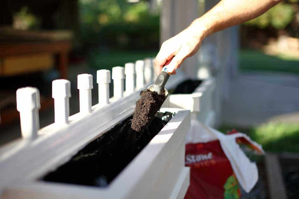 putting dirt into the planter box