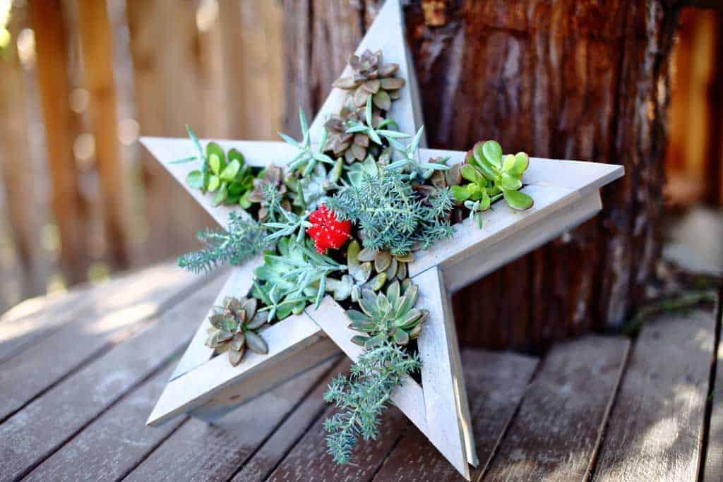 DIY vertical star planter for succulents